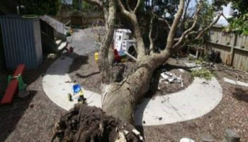 WorkSafe prosecution in childcare centre dead tree collapse case